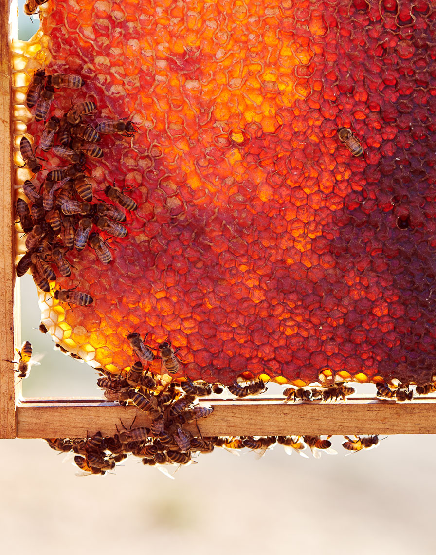 Honey Frame Napa Valley Cookbook